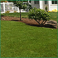 Pruning and Lawn Cleaning Services