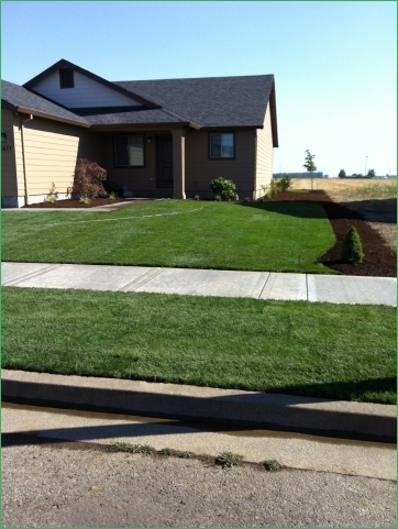 Sod-based Landscaping