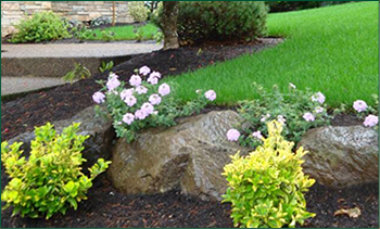 Professional Landscaping and Lawn Services